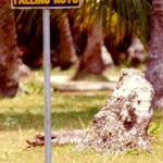 Philippines - Warning sign: Beware of falling nuts
