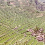 Philippines - Rice terraces near Banaue