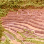 Thailand - Golden Triangle Trekking - Rice terraces in Northern Thailand