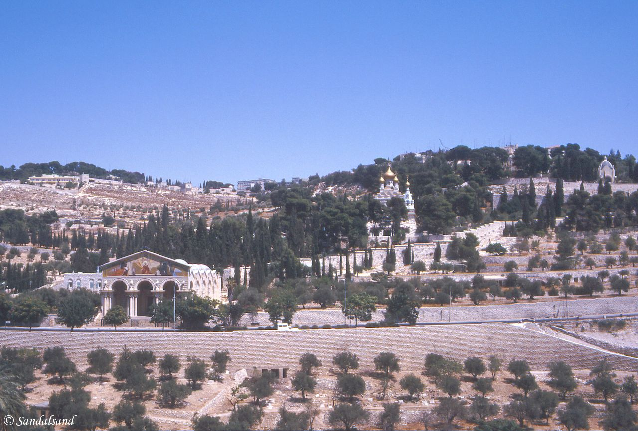 Israel / Palestine - Jerusalem Old Town - Garden of Gethsemane towards Mount of Olives