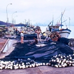 Brazil - Angra dos Reis - Fishing nets in harbour