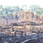 Brazil - Amazonas safari - Amazon slash and burn
