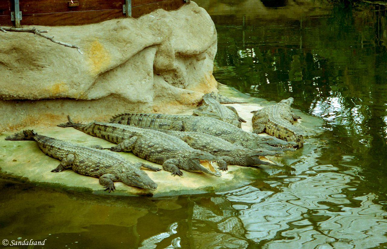 France - Provence - Pierrelatte Crocodile Farm