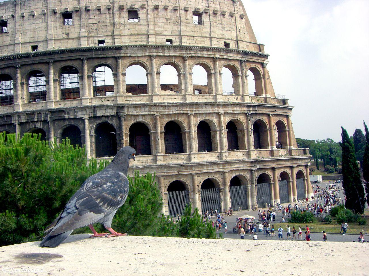 Italy - Roma - Collosseum