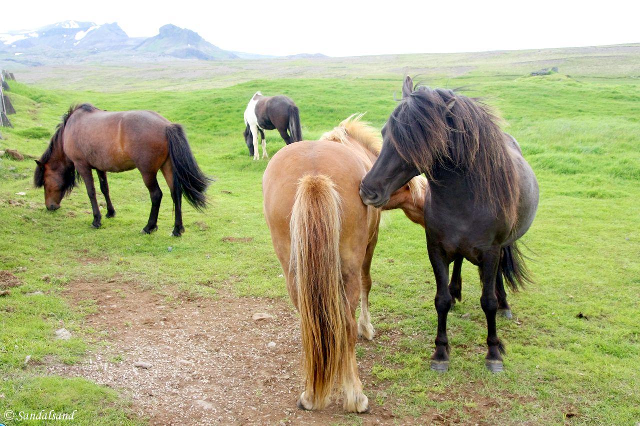 Iceland - Snæfellsnes - Ingjaldshólskirkja