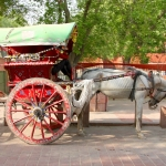 India - Agra - Taj Mahal - Horse carriage for an easier way to the entrance from the car park