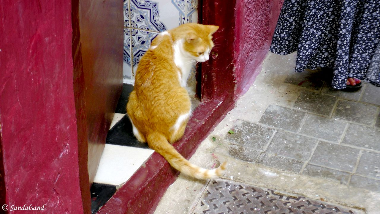 A day trip to Tangier from Spain