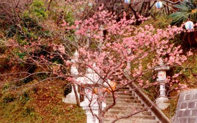 Okinawa – Mild winds, cherry blossoms and a WW2 history