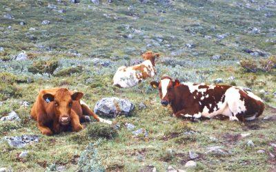 Hikes in Jotunheimen, Norway (5) Leirvassbu to Gjendebu