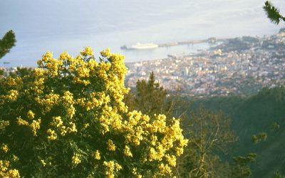 The fertile island of Madeira