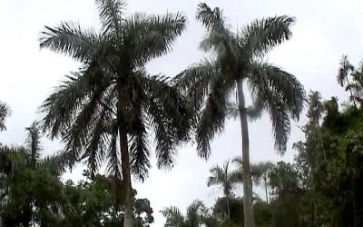VIDEO – Cuba (2) Vinales