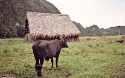Pinar del Rio and the Viñales valley is a favourite in Cuba
