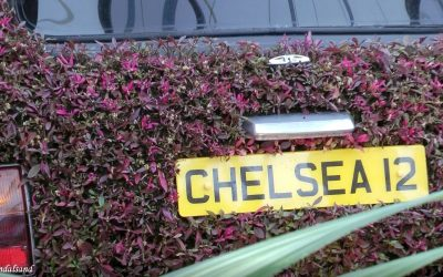 VIDEO – England – Chelsea Flower Show