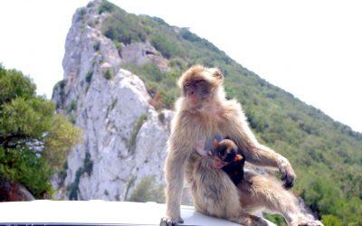 VIDEO – Gibraltar