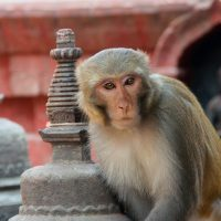 Kathmandu's historic districts and temples