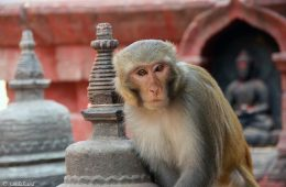 Nepal 2015 (3) Kathmandu's historic districts and temples
