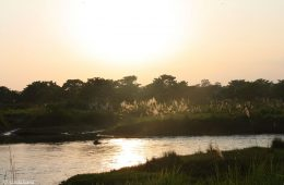 World Heritage #0284 – Chitwan National Park