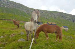 Medieval Faroese history at Kirkjubøur